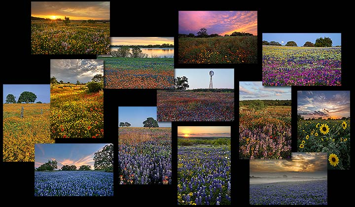 Texas Wildflower Postcards
