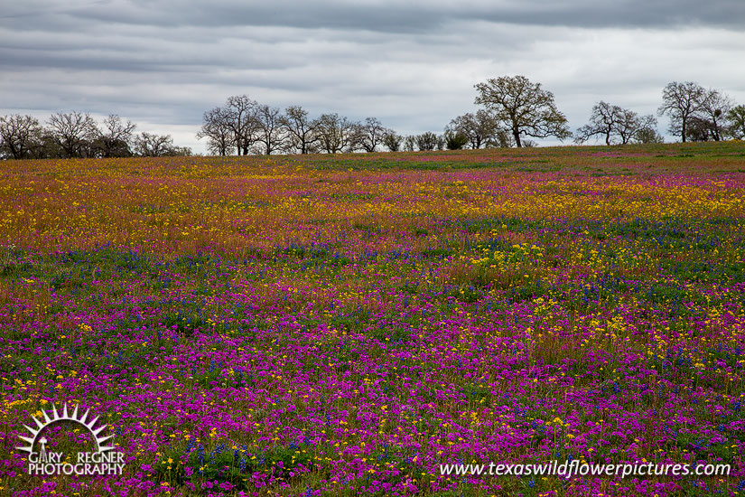 Splash of Color - Texas Wildflowers by Gary Regner