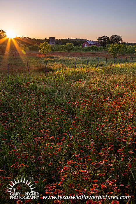 Fade Away - Texas Wildflowers Landscape by Gary Regner
