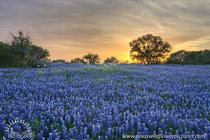 Good Friday - Texas Wildflowers by Gary Regner