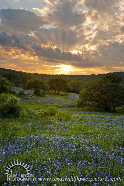 Crepuscular Rays - Texas Wildflowers by Gary Regner