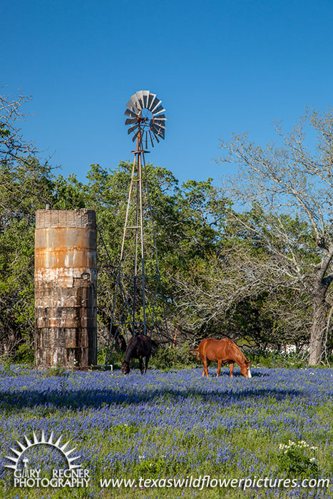 Out to Pasture - Texas Wildflowers and Horses by Gary Regner