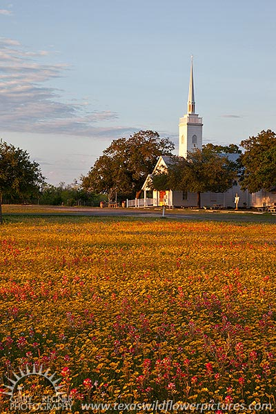 God's Blessing - Texas Wildflowers and Church, New Berlin by Gary Regner