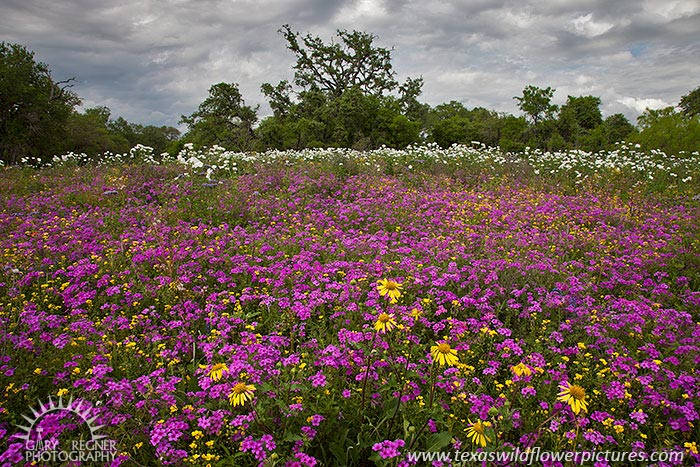 Suddenly It's Spring - Texas Wildflowers by Gary Regner