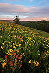 Paintbrush & Balsamroot - Oregon Wildflowers Sunset Landscape by Gary Regner