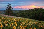 Distant Storm - Oregon Wildflowers Sunset Landscape by Gary Regner