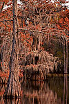 Swamp Cypress - Caddo Lake by Gary Regner