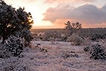 Winter Blanket - Texas Hill Country by Gary Regner