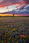 Spring Thunderstorm - Texas Wildflowers, Bluebonnets Sunset by Gary Regner
