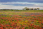Multicolor Meadow - Texas Wildflowers, Paintbrush Landscape by Gary Regner