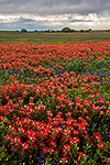 Year of the Paintbrush - Texas Wildflowers, Paintbrush Landscape by Gary Regner