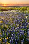 A Perfect Day - Texas Wildflowers by Gary Regner