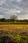 Taking Flight - Texas Wildflowers by Gary Regner