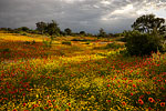 A Break in the Clouds - Texas Wildflowers by Gary Regner