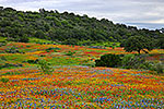 Painted Hills - Texas Wildflowers Landscape by Gary Regner