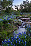 Bluebonnet Creek - Texas Wildflowers Sunset Landscape by Gary Regner