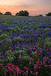 A Field of Dreams - Texas Wildflowers Sunrise Landscape by Gary Regner