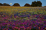 Moonlight Serenade - Texas Wildflower Moonrise Landscape by Gary Regner
