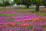 The Color of Spring - Texas Wildflowers Landscape by Gary Regner