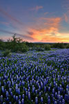 Distant Light - Texas Wildflowers Sunset Landscape by Gary Regner