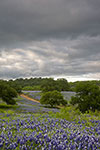 Spring Storm - Texas Wildflowers Landscape by Gary Regner
