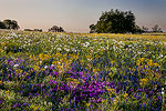 Spring Bounty - Texas Wildflowers Sunrise Landscape by Gary Regner