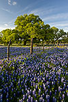 County Road - Texas Wildflowers Landscape by Gary Regner