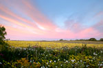 The Big Bang - Texas Wildflower Sunrise Landscape by Gary Regner