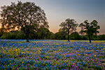Oh So Devine - Texas Wildflowers Sunset Landscape by Gary Regner