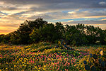 First Light - Texas Wildflowers Sunrise Landscape by Gary Regner