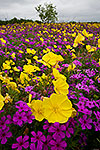 Complementary Colors - Texas Wildflowers Landscape by Gary Regner