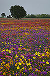 Confetti - Texas Wildflowers Landscape by Gary Regner