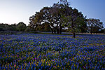 Blue - Texas Wildflowers Sunset Landscape by Gary Regner