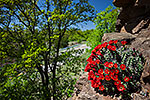Crevice - Texas Wildflowers Landscape by Gary Regner
