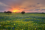 Spring Medley - Texas Wildflowers, Bluebonnets at Sunset by Gary Regner