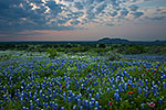 A Touch of Red - Texas Wildflowers, Hill Country Bluebonnets at Sunset by Gary Regner