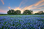 Wisps - Texas Wildflowers, Hill Country Bluebonnets at Sunset by Gary Regner