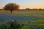 Huisache Wildflower Meadow - Texas Wildflowers, Bluebonnets by Gary Regner