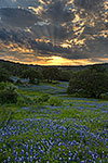 Crepuscular Rays - Texas Wildflowers, Hill Country Bluebonnets at Sunset by Gary Regner