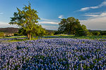 Llano Uplift - Texas Wildflowers, Hill Country Bluebonnets by Gary Regner