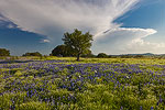 Approaching Storm - Texas Wildflowers, Hill Country Bluebonnets by Gary Regner