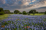 Flowing - Texas Wildflowers, Hill Country Bluebonnets by Gary Regner