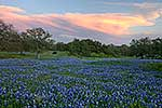 Distant Thunder - Texas Wildflowers, Hill Country Bluebonnets at Sunset by Gary Regner