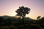 Joshua Tree II by Gary Regner