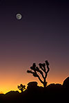Joshua Tree - by Gary Regner