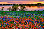 Wildflower Landscapes Gallery