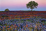 Field at Dusk - by Gary Regner