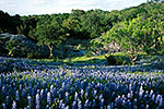 Bluebonnets and Creek - by Gary Regner